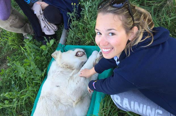 volontariato per curare gli animali