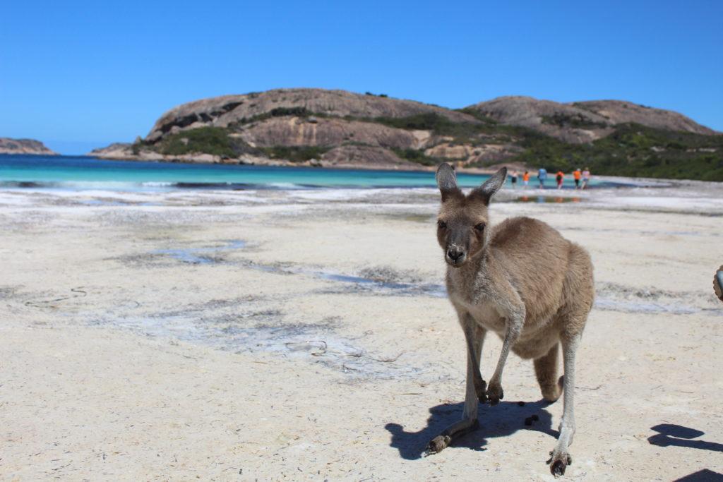 Lavorare in Australia con il Working Holiday Visa